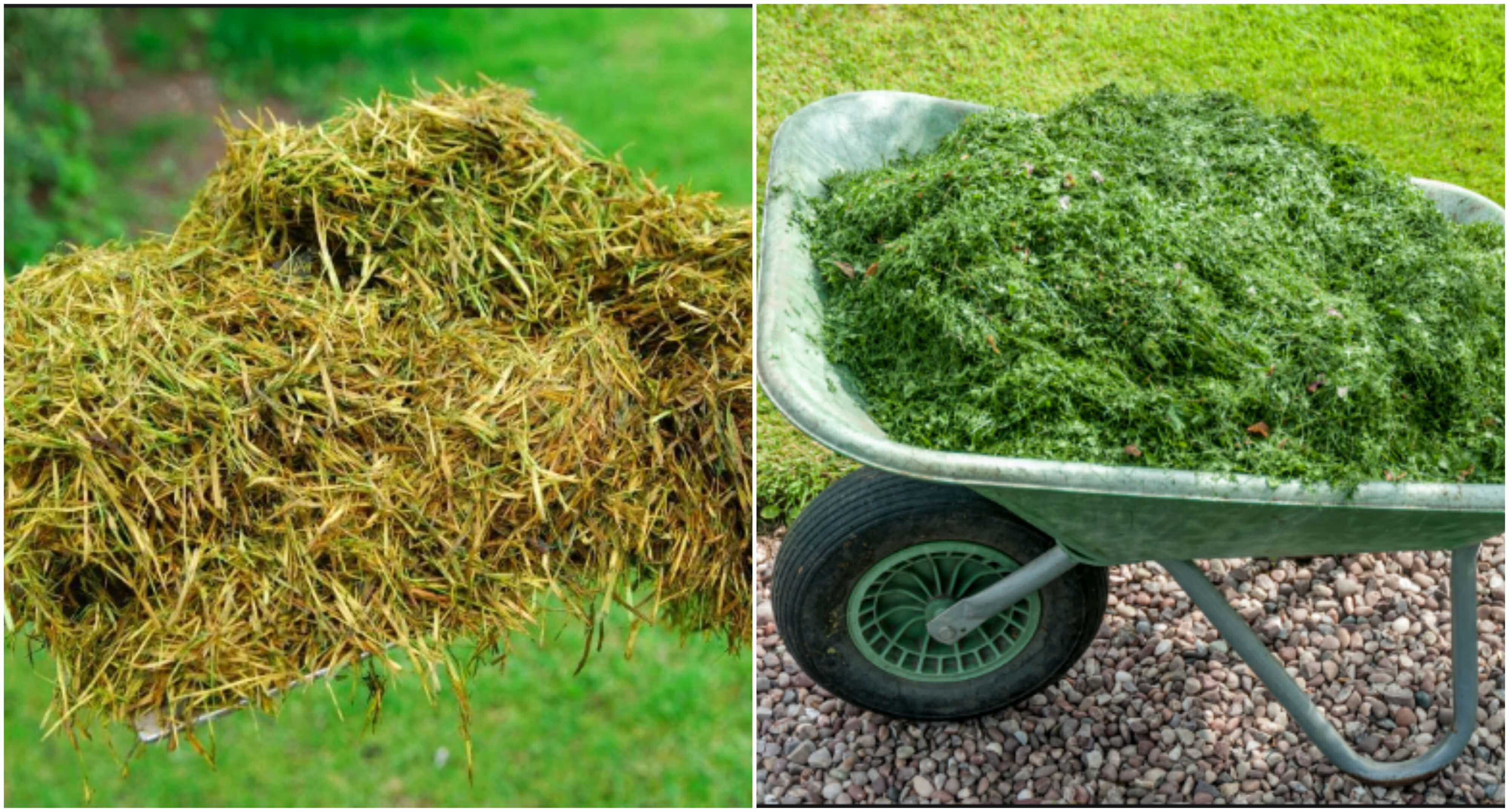 Grass can also be used as a very nutrient-rich mulch