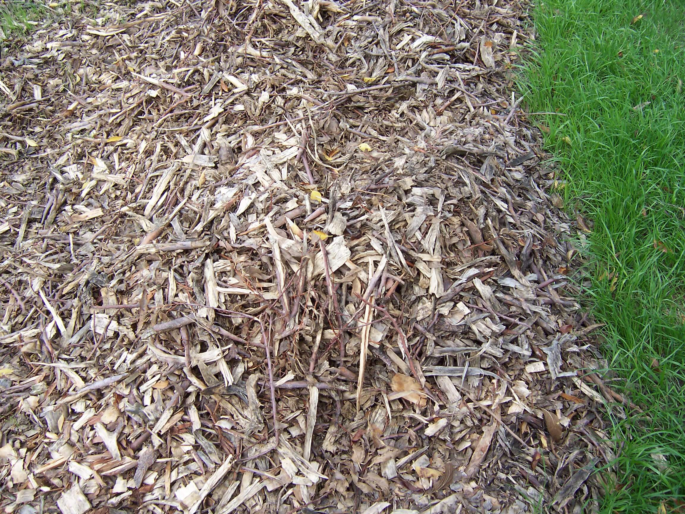 Wood chips are a popular choice in mulching
