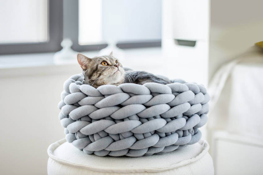 Learn how to arm knit this bed and your cat will love you forever!