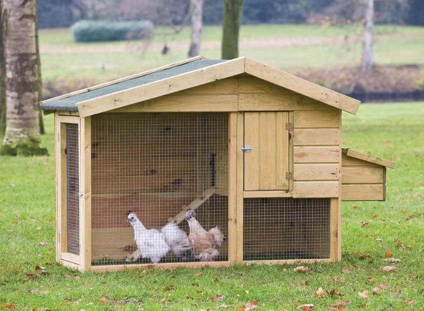 It's important to provide an adequate space for the chickens to roam and live
