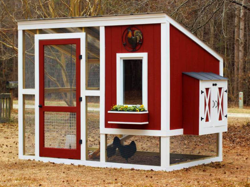 Make Your Own Chicken Coop With This Simple Guide