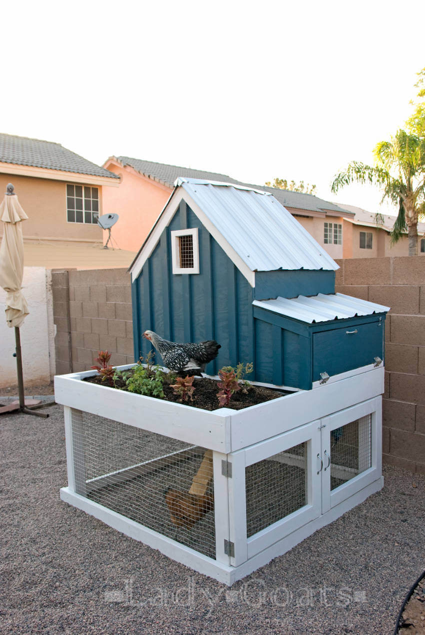 A small but cozy coop for your backyard