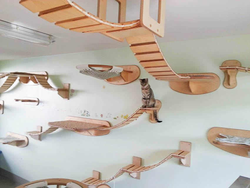 Or you can make a cat playground so all the cats in the house can enjoy!