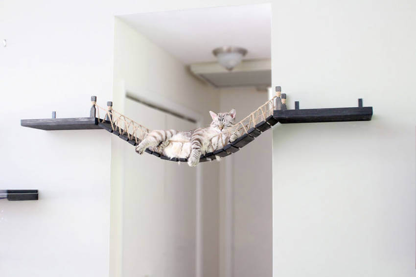 A cat bridge that connects two ends of a hallway!