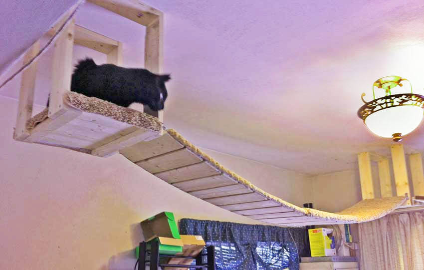 A high ceiling bridge to work as a refuge for your cat!