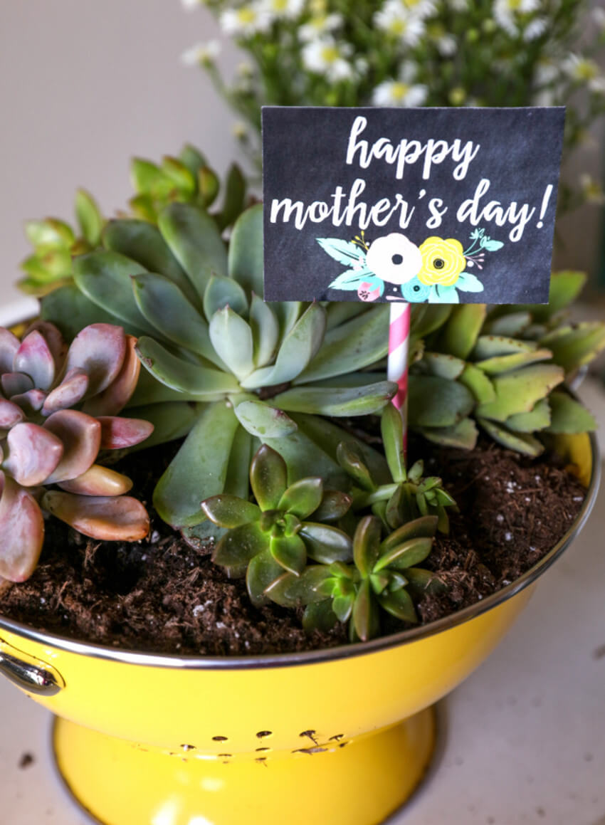 This succulent colander planter is adorable.