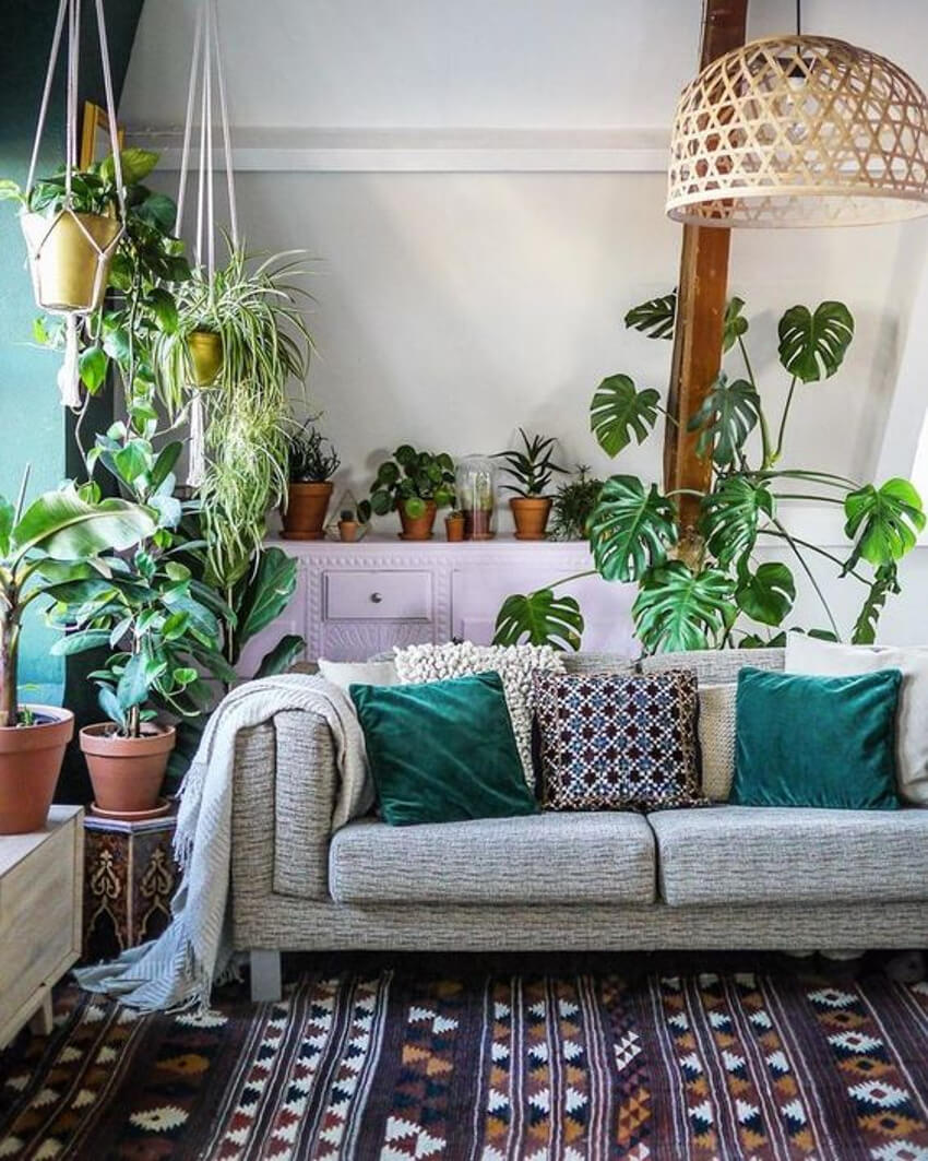 Plants are also a good and inexpensive choice to decorate the room.
