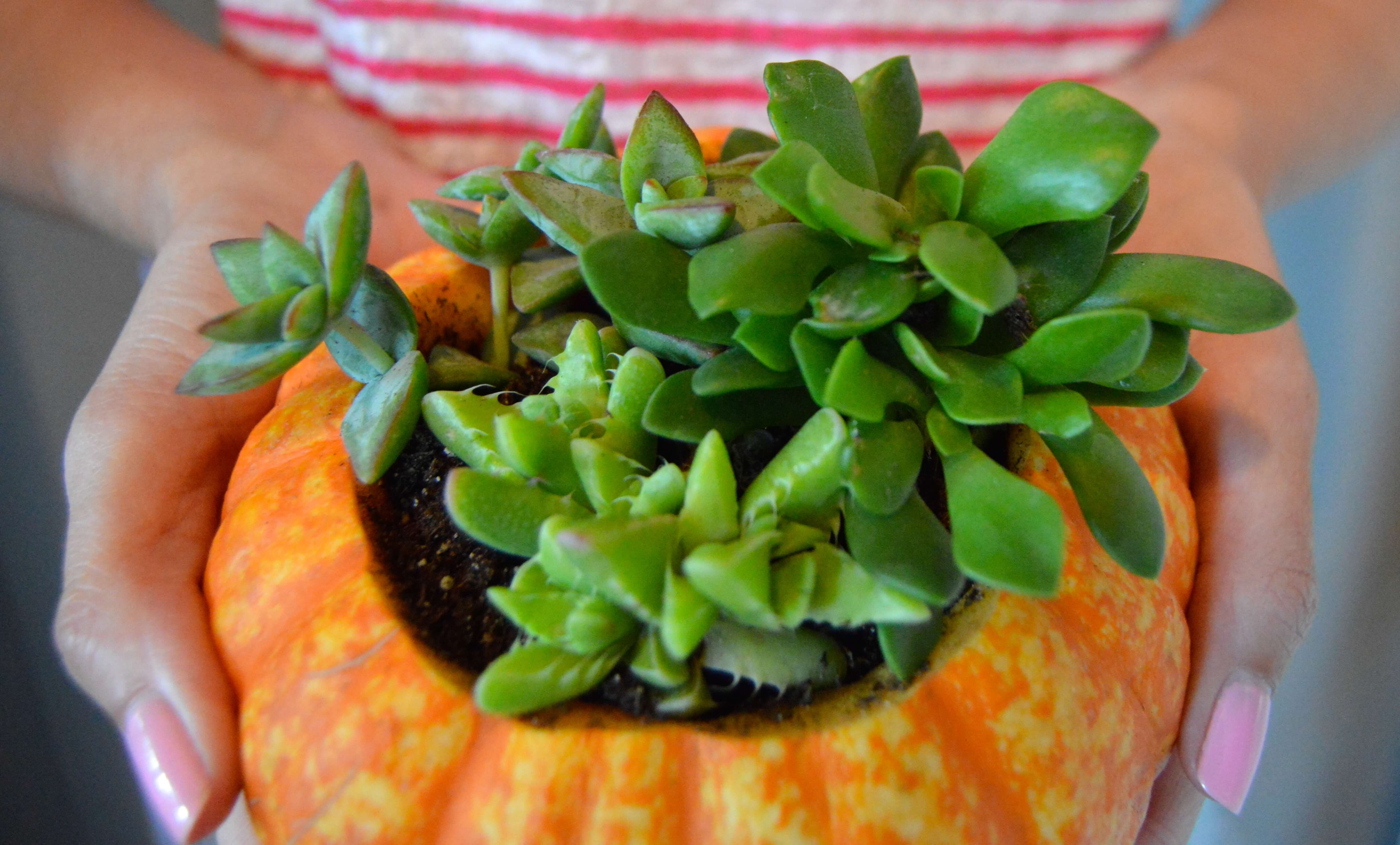 Backyard garden pumpkin planter for any plant