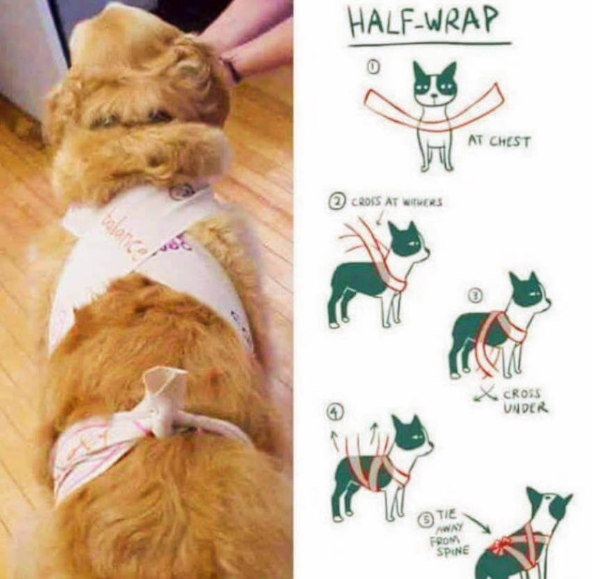 A step by step on how to half wrap your dog (it's really simple)!