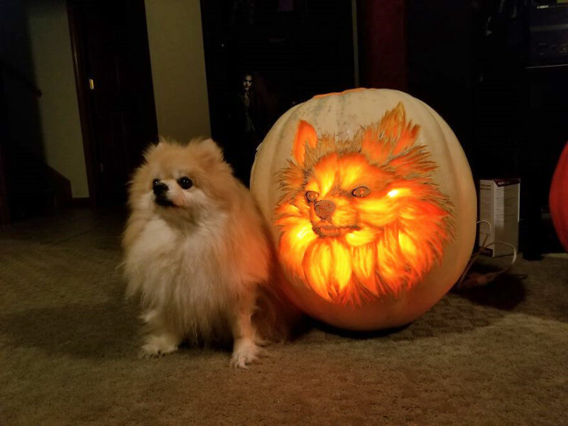 We're Obsessed with the New Dog-o'-Lantern Halloween Trend!