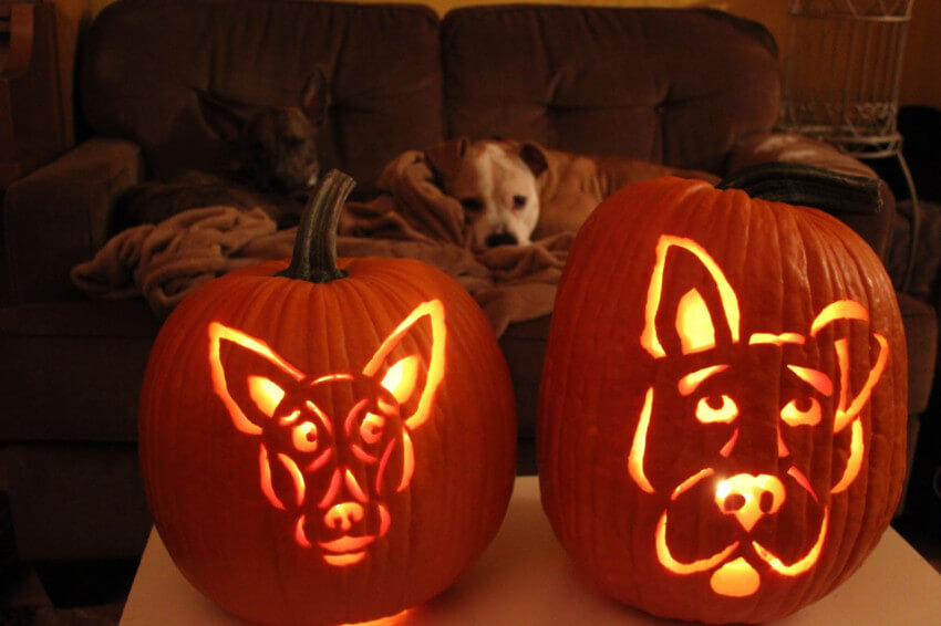 Dog-o'-lanterns are perfect for capturing your dog's personality.
