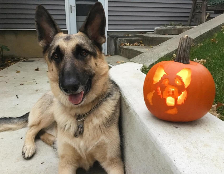 If you're a beginner to the dog-o'-lantern, start with simple shapes.