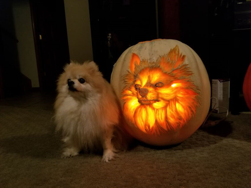 If you have the carving skills, you can create a beautiful dog-o'-lantern!