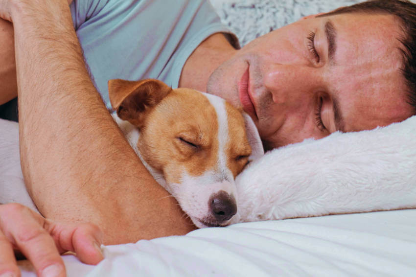 Since dogs give us safety and calmness, we can fall asleep faster!