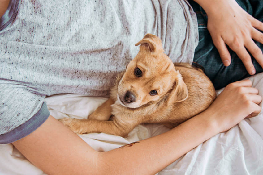 Stress and anxiety relief is of extreme importance for our mental health and snuggling with dog can bring you that peace!