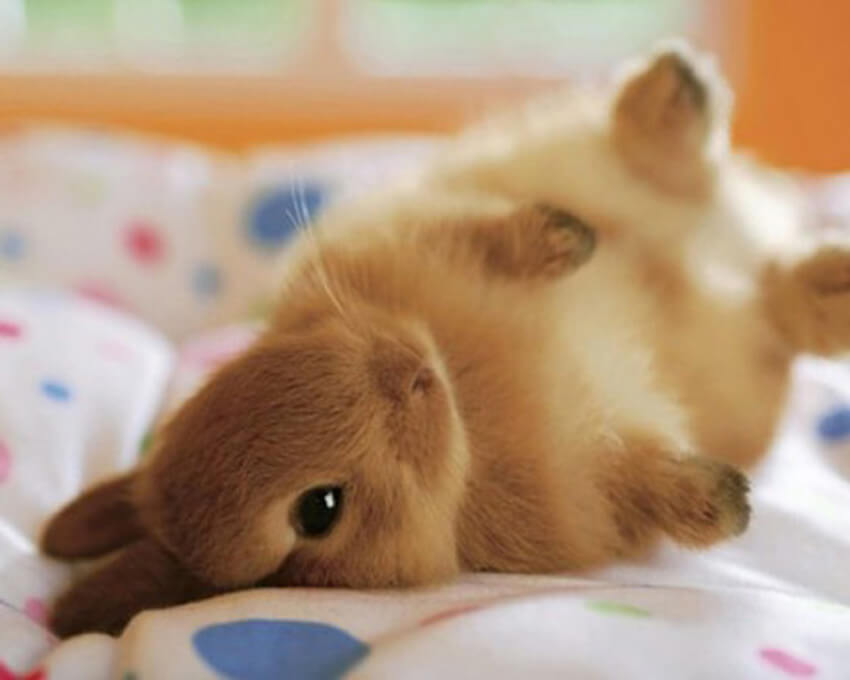 A bunny is really cute, but it needs to be cared for as much as your dog!