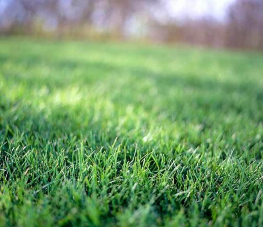 Create a healthy lawn.
