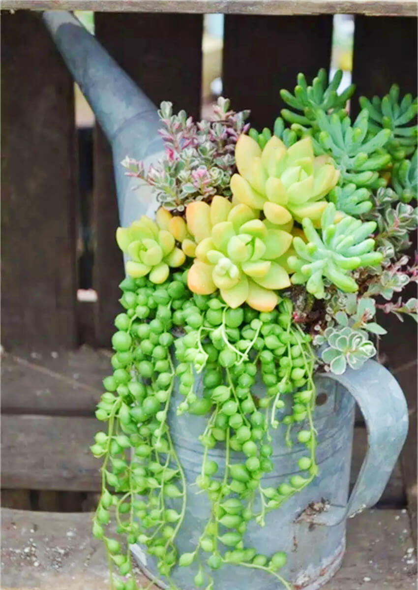 Succulents are easy to work with and create a gorgeous decor accent in your garden.