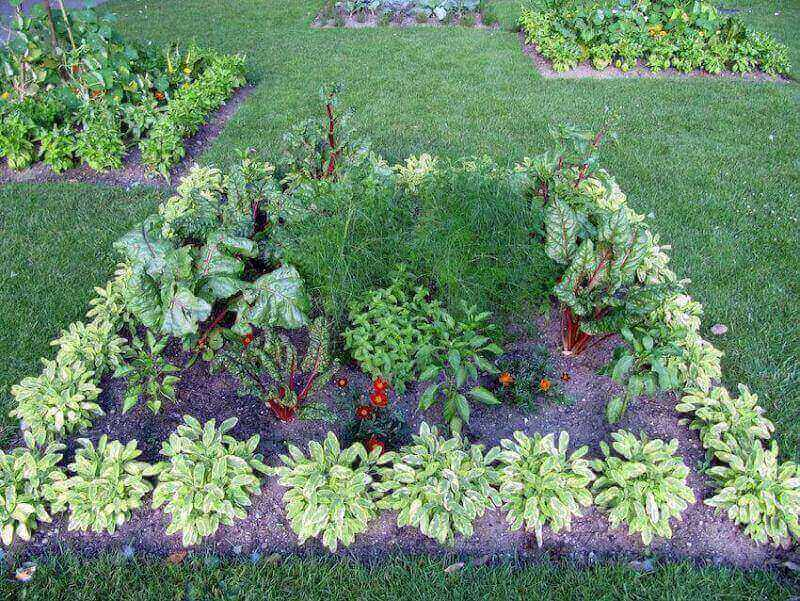 Edible Landscaping The Eco Friendly Trend Homeowners Are Loving