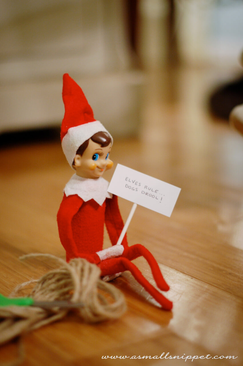Is this elf jealous of your furry friend? Let's help them make up!