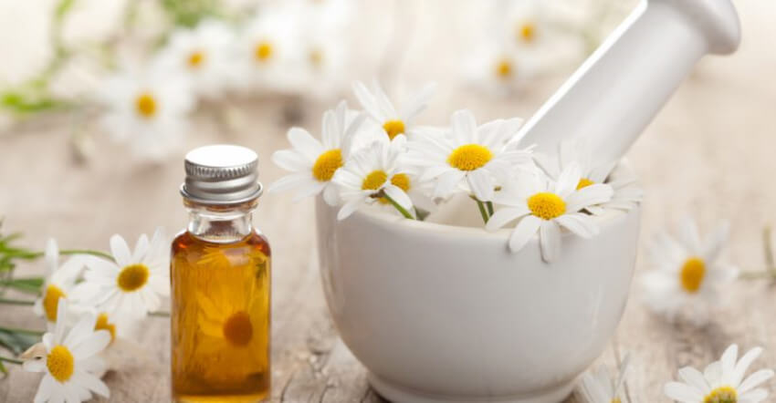 Chamomile relaxes the body and mind, giving a boost to your well-being!