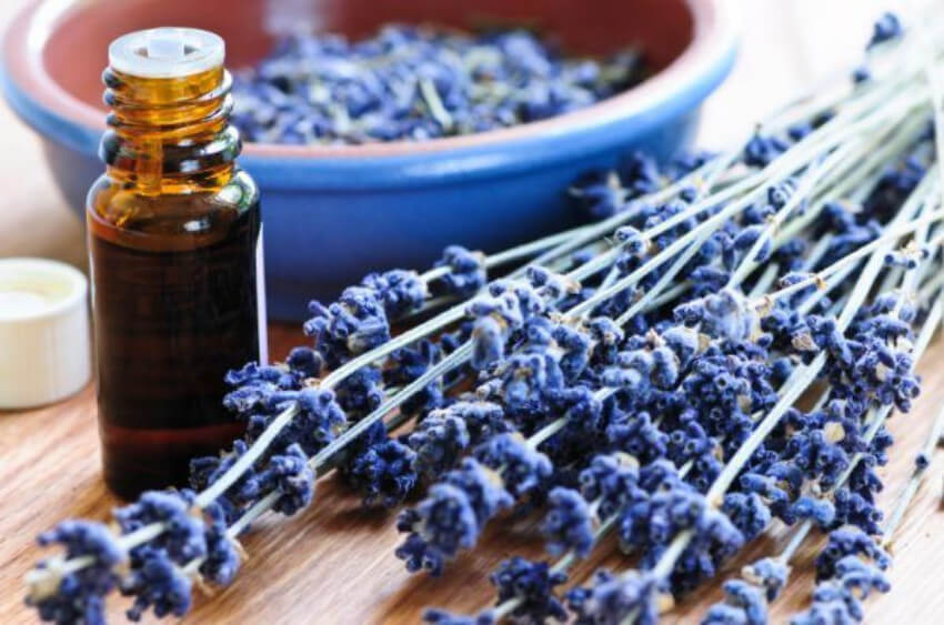 Lavender is great both for the body and for the mind!