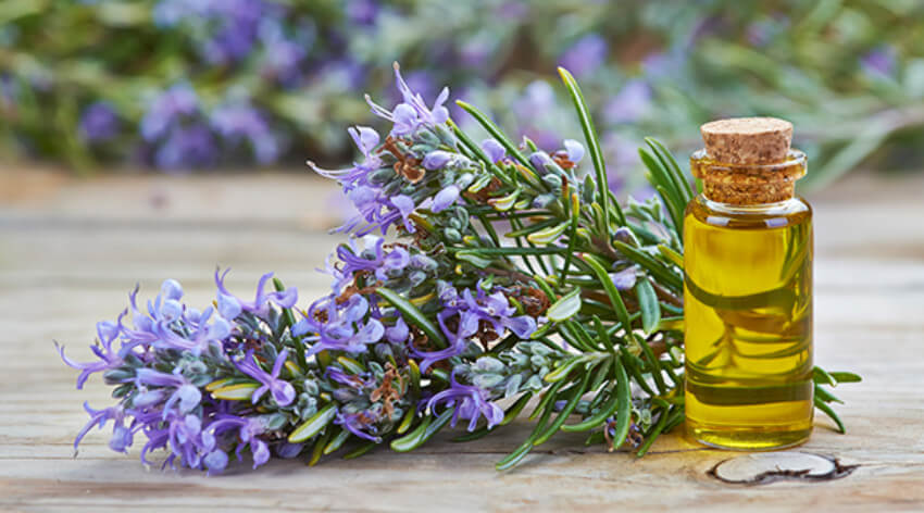 Use rosemary oil by itself or mix with a tablespoon of a carrier oil!