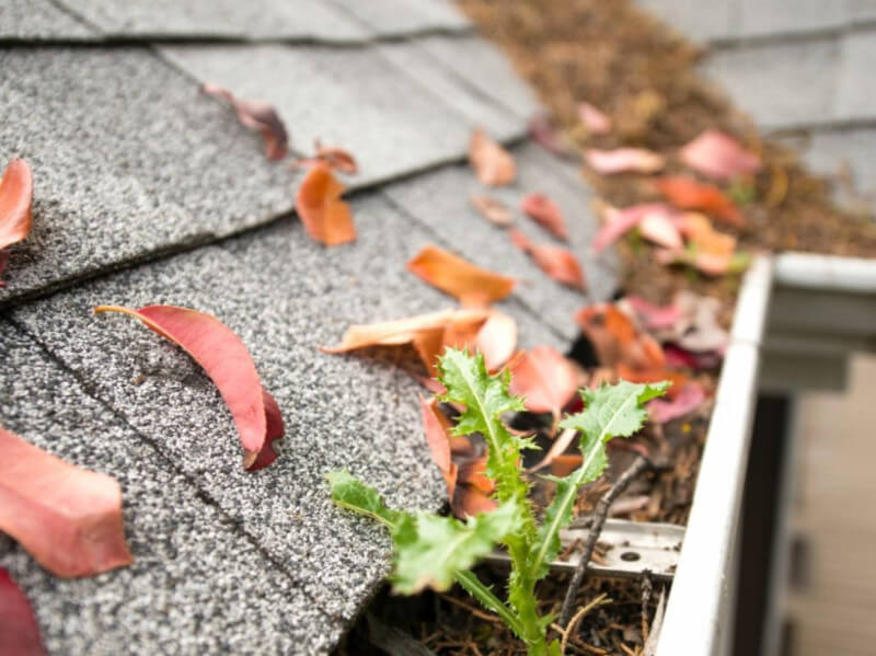 Get Your Home Ready with This Fall Maintenance Checklist