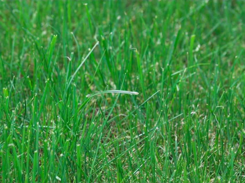 A healthy lawn requires attention.