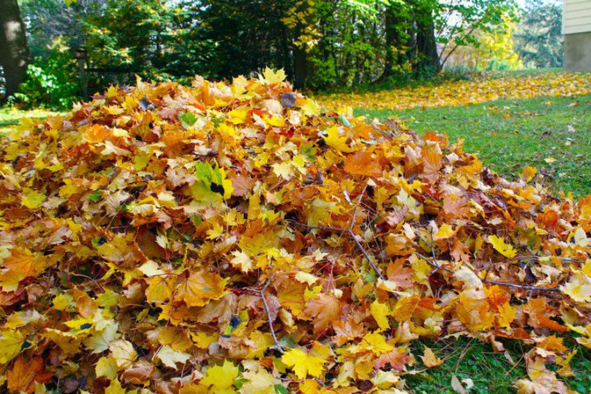 Fallen leaves can help your lawn too.