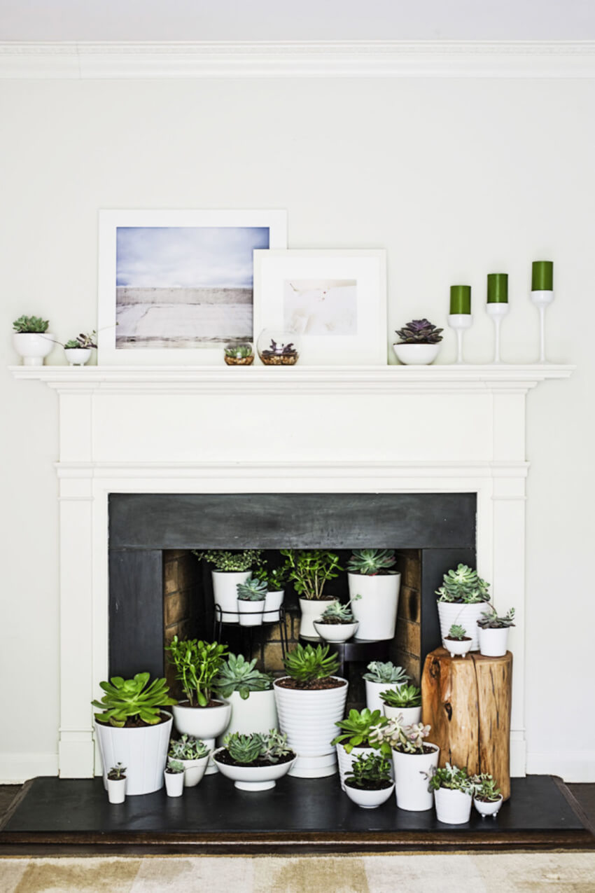 Greenery can instantly liven up the space!