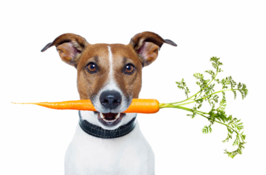 Carrots have lots of benefits for dogs!