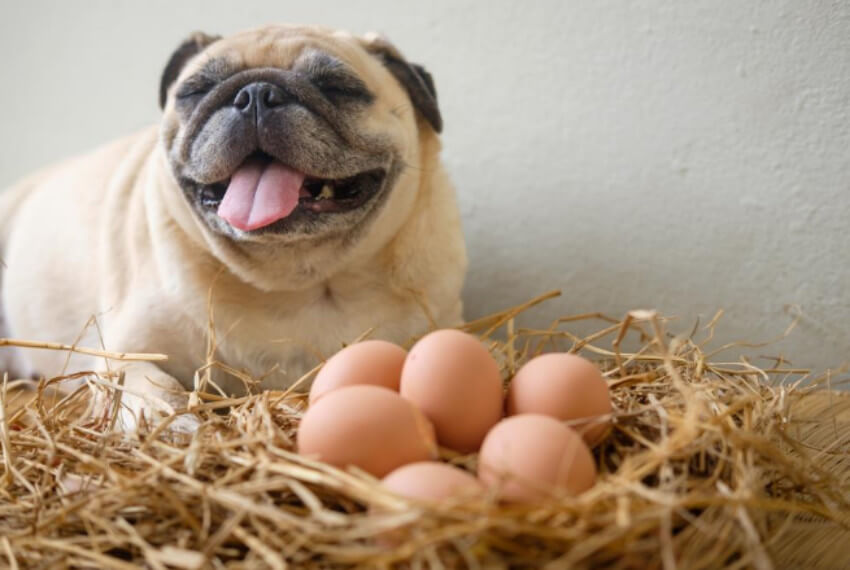 Both cooked and raw eggs can be given to dogs!