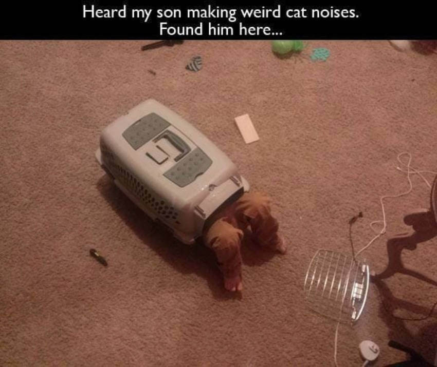 Mom, I can't find the cat!