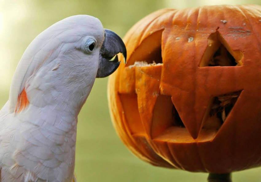 Bird and pumpkin seem to get along just fine here!