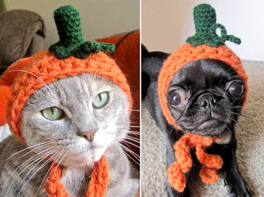 A pumpkin hat for puppy and kitten, who's pulling it off?