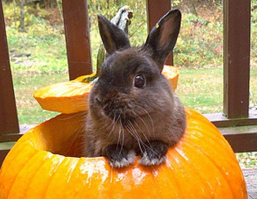 A cute bunny wanting to be a part of this awesome tradition that is Halloween!