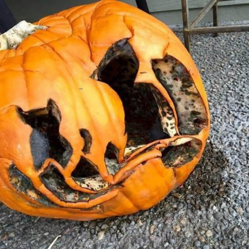 When you finally carve a beautiful pumpkin, but it doesn't last more than a few days.