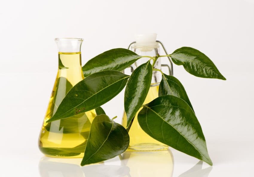 Camphor oil can be unpleasant to humans, but it will do the job!