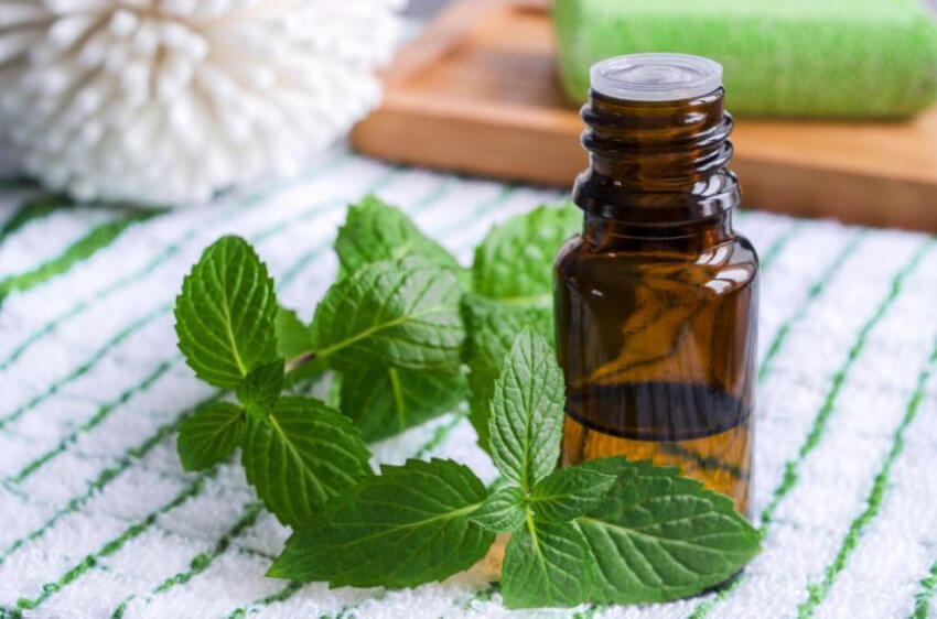 Peppermint oil is the best option to get rid of both spiders and mice!