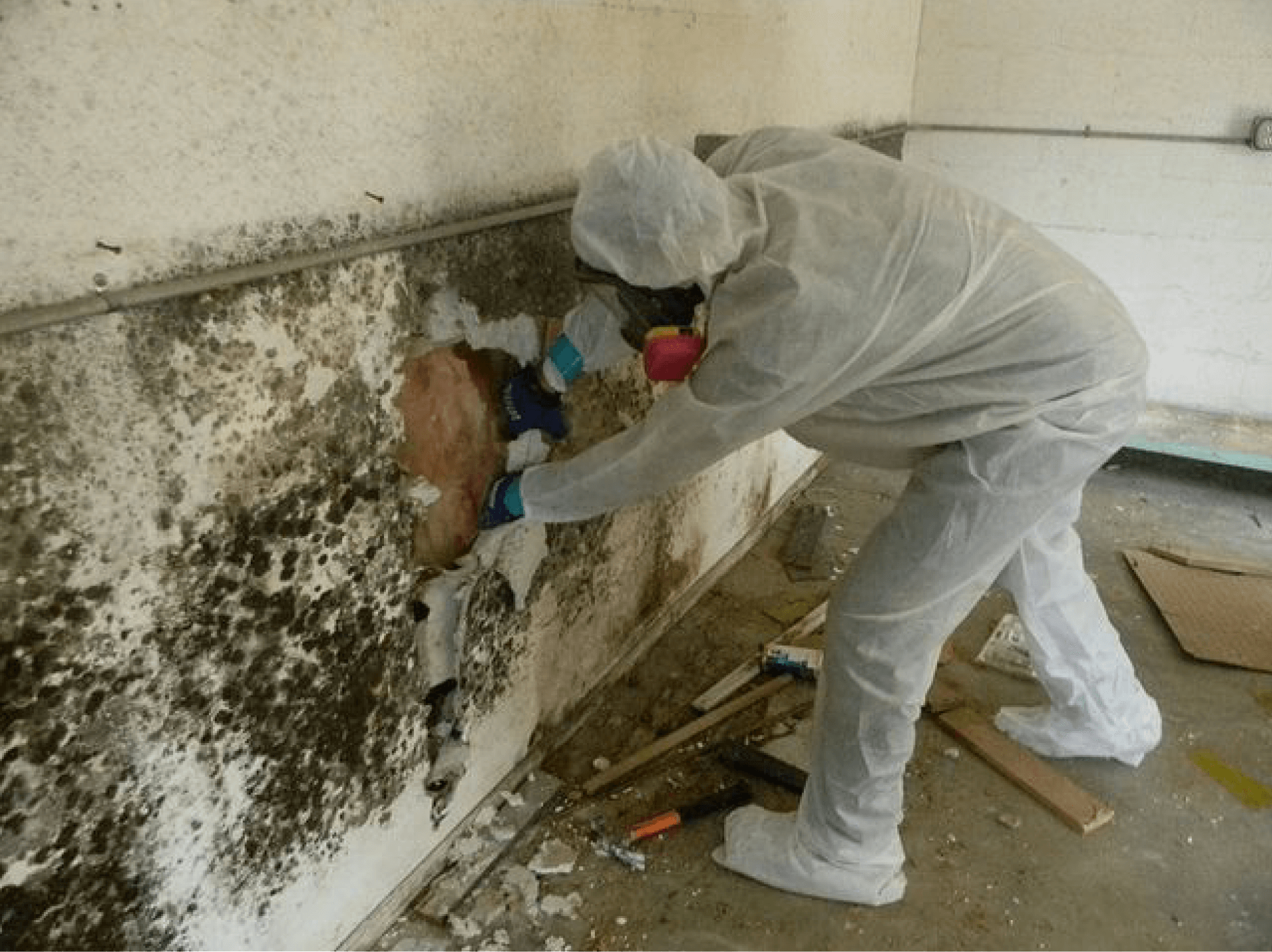 Mold remediation is the only way to be 100% sure all the spores were killed.