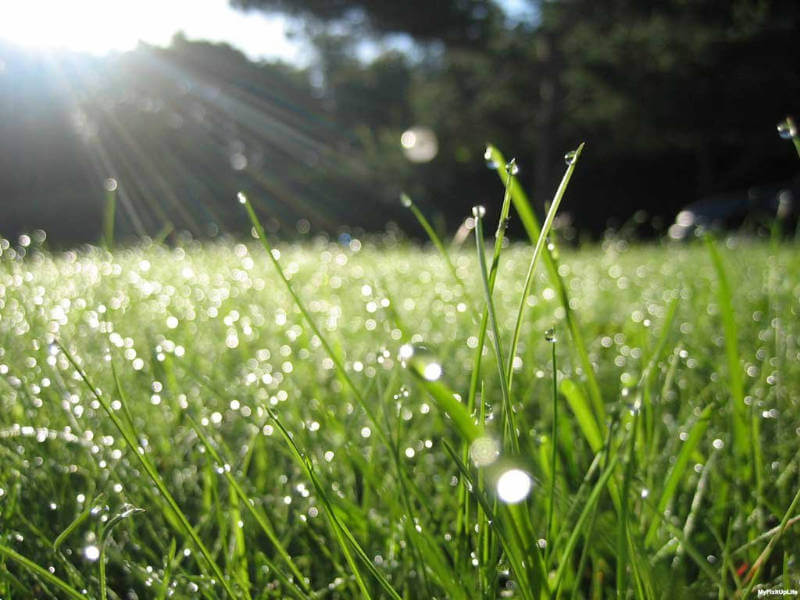 How To Get a Healthy Green Lawn (While Being Eco-Friendly!)