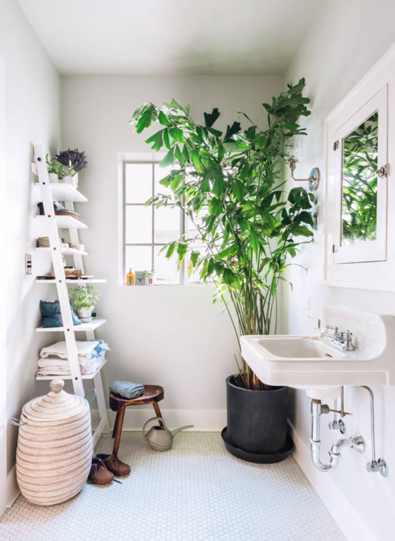 Greenery adds great aesthetic value to your home.