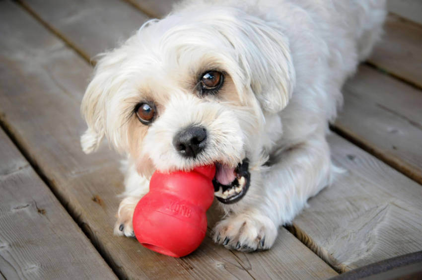 There's a reason children's and dog's toys are manufactured separately!