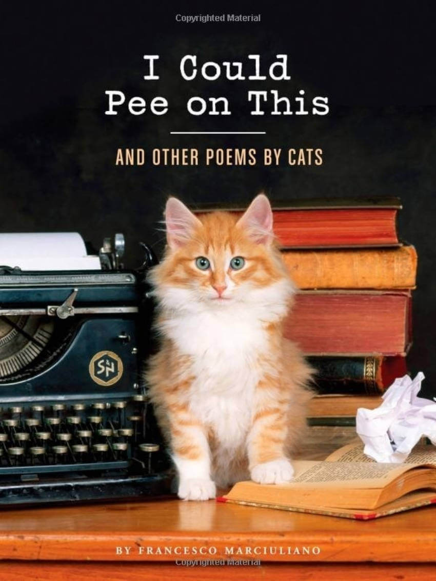 Just look at this cover. Just... just look. It can make any cat lover swoon immediately.