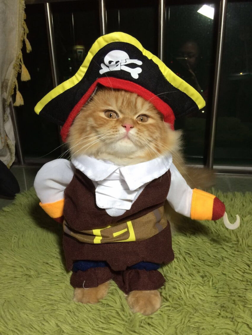 This awesome costume will turn your feline friend into a take-no-prisoners pirate
