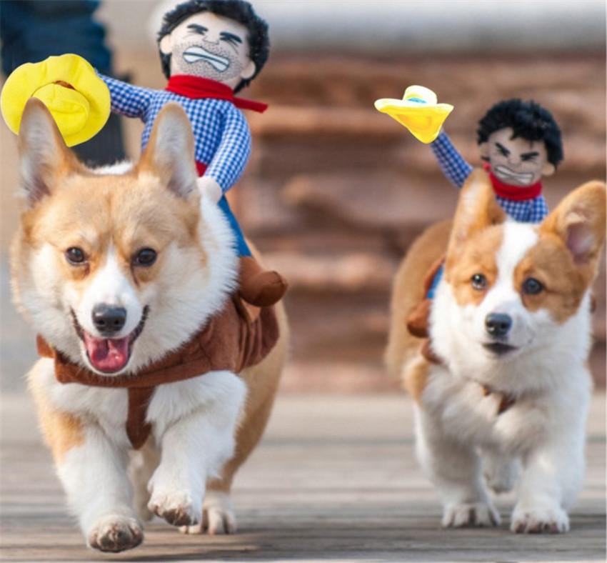 This awesome cowboy pet suit because dog costumes are never enough