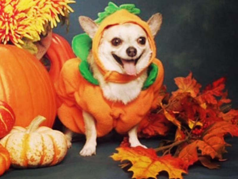 9 Hilarious (And Relatable) Pictures For Those Who Love Fall