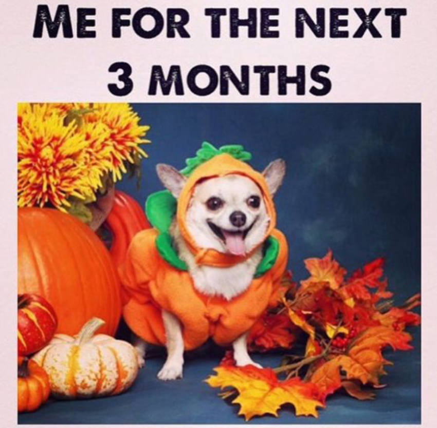 This dog is the official face of Fall from now on.