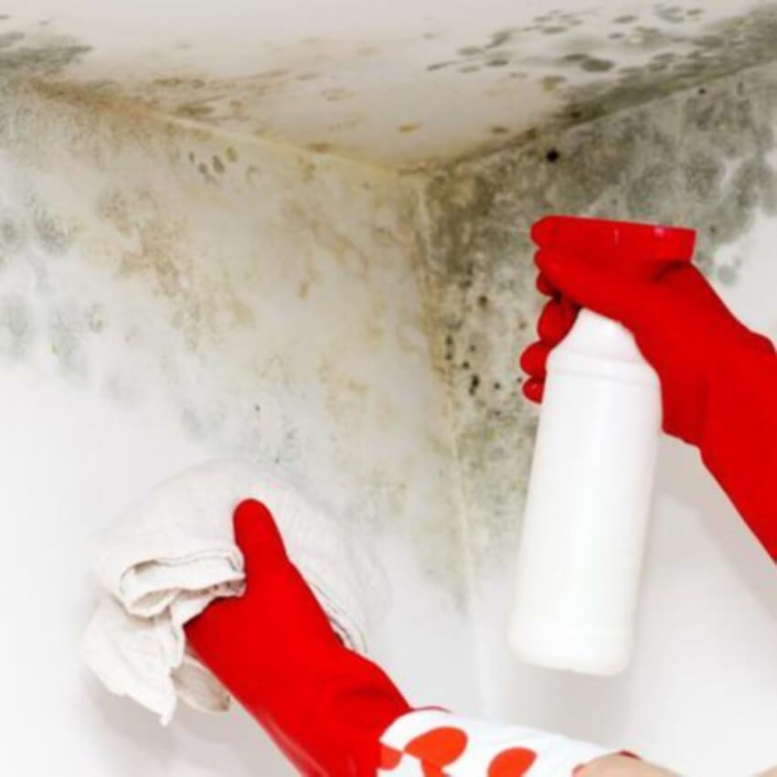 Don't DIY mold removal at home!